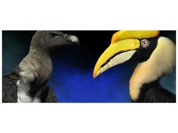 Obraz ptačích zobáku (F001358F12050)