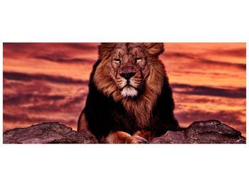 Obraz krále zvířat (F001507F12050)