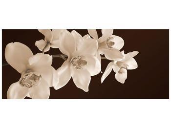 Krásný obraz bílých květin (F001888F12050)