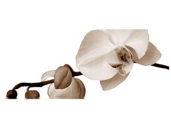 Krásný obraz bílé orchideje (F001900F12050)