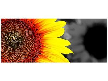Obraz květu slunečnice (F002400F12050)