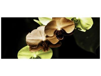 Obraz hnědých a zelených orchideí  (F002723F12050)