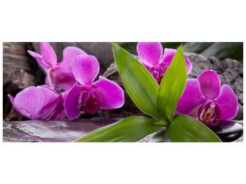 Obraz fialových orchidejí s listím (F004027F12050)