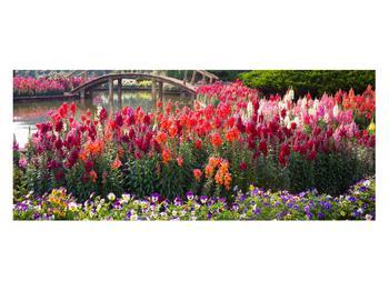 Obraz kvetín (K012048K12050)