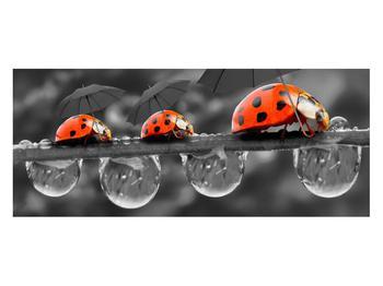 Obraz lienok sedembodkových s dáždnikmi (K012059K12050)