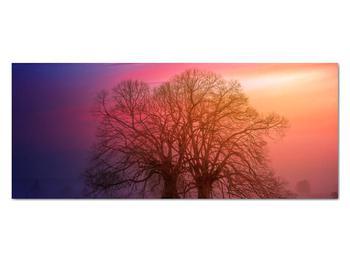 Obraz stromov v hmle (V020088V12050)