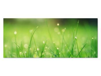 Obraz - rosa na tráve (V020169V12050)