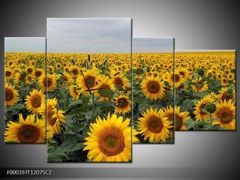 Obraz slunečnicového pole (F000397F12075C2)