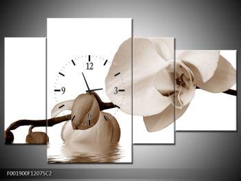 Krásný obraz bílé orchideje (F001900F12075C2)