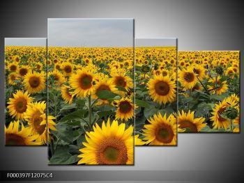 Obraz slunečnicového pole (F000397F12075C4)