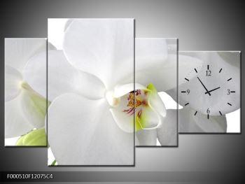 Obraz orchideje (F000510F12075C4)