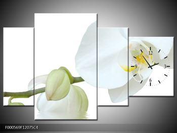 Obraz bílé orchideje (F000569F12075C4)