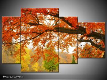 Krásný obraz podzimního parku (F001312F12075C4)