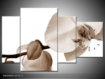 Krásný obraz bílé orchideje (F001900F12075C4)