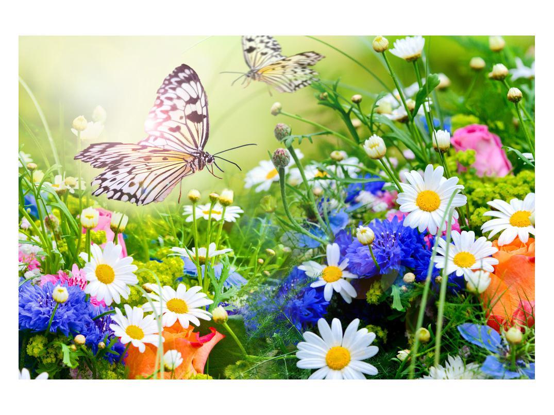 Slika poletnih cvetov z metuljem (K012220K12080)