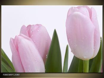 Obraz růžových tulipánů (F000389F12080)