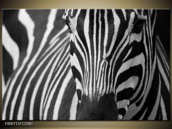 Obraz černobílého detailu zebry (F000715F12080)