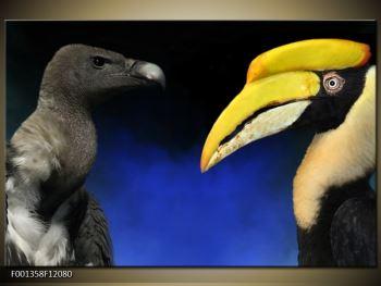 Obraz ptačích zobáku (F001358F12080)