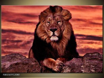 Obraz krále zvířat (F001507F12080)