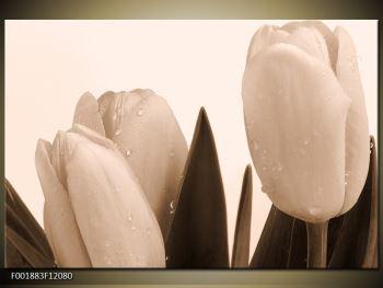 Krásný obraz tulipánů (F001883F12080)