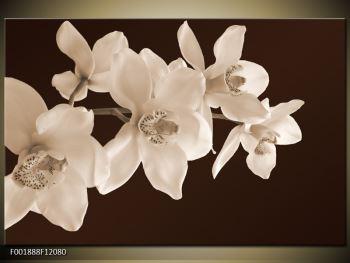 Krásný obraz bílých květin (F001888F12080)