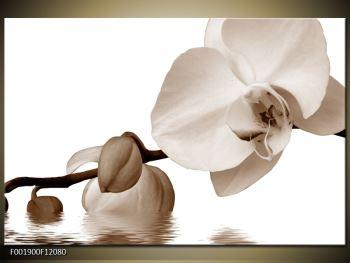Krásný obraz bílé orchideje (F001900F12080)