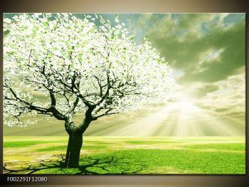 Obraz stromu na jaře (F002291F12080)
