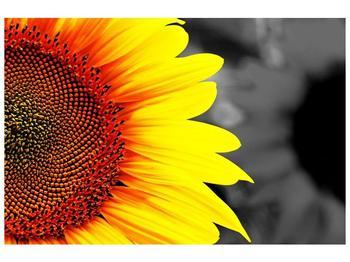Obraz květu slunečnice (F002400F12080)