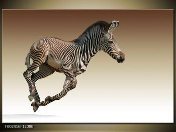 Obraz běžící zebry (F002416F12080)