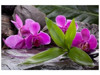 Obraz fialových orchidejí s listím (F004027F12080)