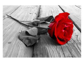 Obraz rudé růže (K011138K12080)