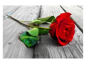 Obraz červené růže (K011140K12080)