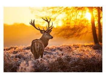 Obraz jelena (K011281K12080)