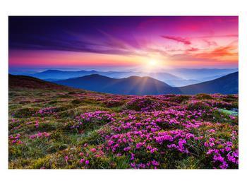 Obraz horské rozkvetlé krajiny (K011322K12080)