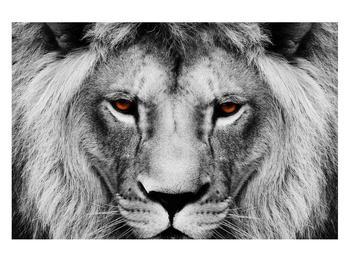 Černobílý obraz lva (K011390K12080)