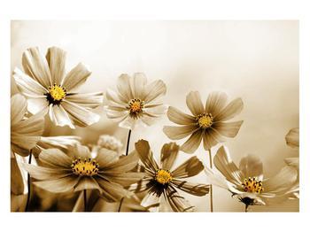 Obraz květů (K011484K12080)
