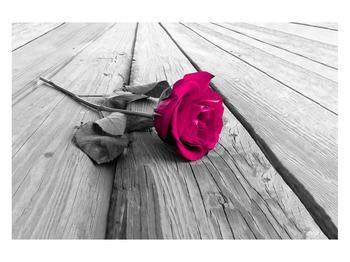 Obraz růže (K011856K12080)