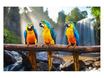 Obraz papoušků (K011994K12080)