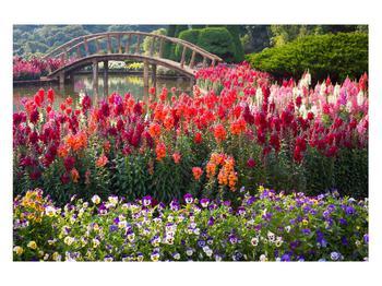 Obraz kvetín (K012048K12080)