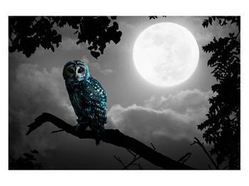 Tablou cu bufnița nocturnă (K012185K12080)