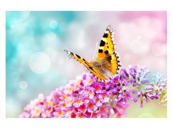 Obraz motýla na květech (K012351K12080)