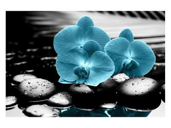Tablou cu flori de orhidee albastre (K012398K12080)