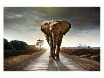 Tablou cu elefant (K012479K12080)