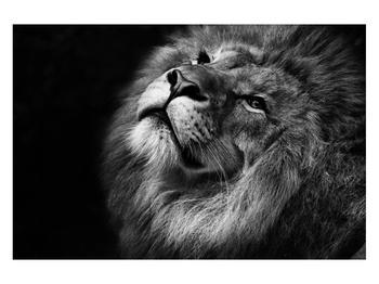Černobílý obraz lva (K012767K12080)