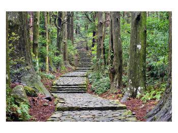 Obraz kamenných schodů v lese (K014268K12080)