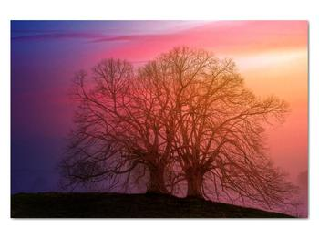 Obraz stromov v hmle (V020088V12080)