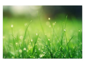 Obraz - rosa na tráve (V020169V12080)