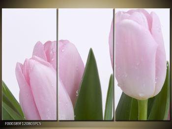 Obraz růžových tulipánů (F000389F120803PCS)