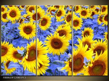 Obraz slunečnic (F000619F120803PCS)