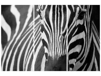Obraz černobílého detailu zebry (F000715F120803PCS)